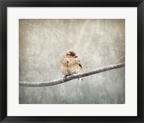 Framed Sparrow Braving The Cold Print