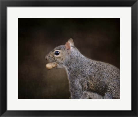 Framed Nut Collector Squirrel Print
