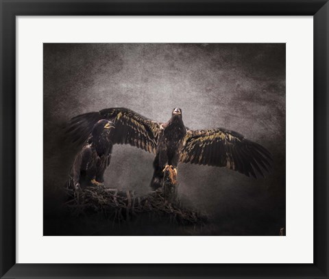 Framed Protector Juvenile Bald Eagles Print