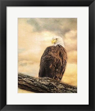 Framed Queen At Rest Bald Eagle Print
