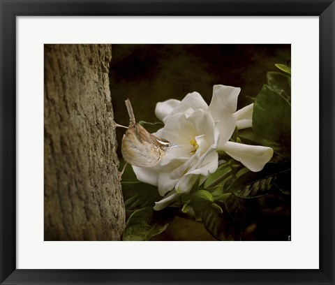 Framed Scent Of The Gardenia Print