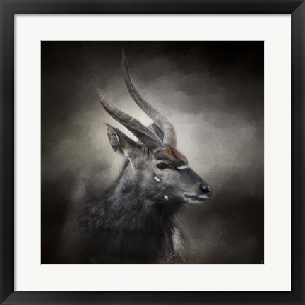 Framed Waiting For The Storm Nyala Buck Print
