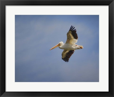 Framed Watching The World From Above Print