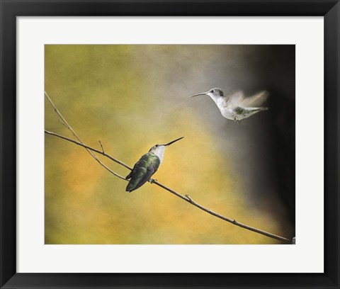 Framed Whisper of Your Wings Hummingbirds Print