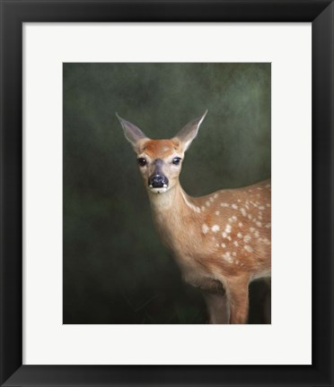 Framed White Tailed Fawn Portrait Print