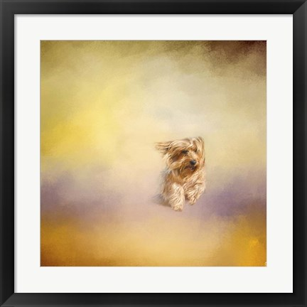 Framed Yorkie Running Into The Wind Print