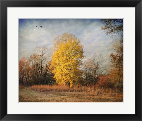 Framed Golden Moment Print