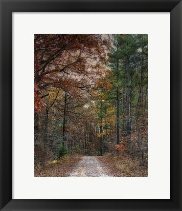 Framed Chickasaw Forest In Autumn 1 Print