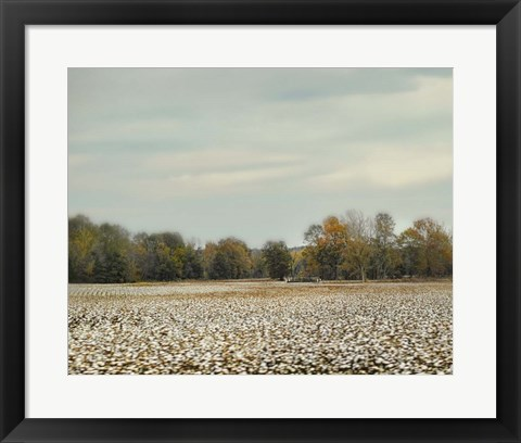 Framed Cotton Field In Autumn Print