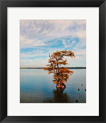 Framed Cypress In Autumn 1 Print
