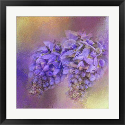 Framed Enticing Wisteria Print