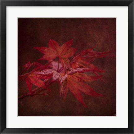 Framed Japanese Maple Print