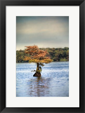 Framed Lonely Little Cypress Tree Print