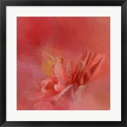 Framed Salmon Hibiscus 3 Print