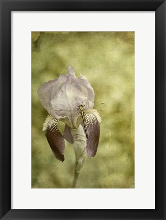 Framed Vintage Iris And Dragonfly Print