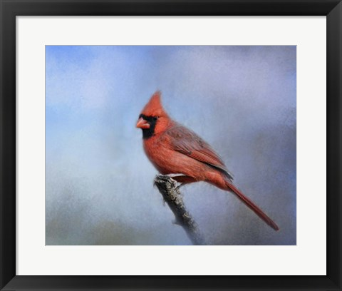 Framed Cardinal At First Frost Print