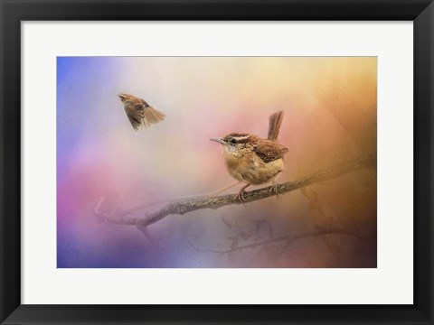 Framed Carolina Wrens Print