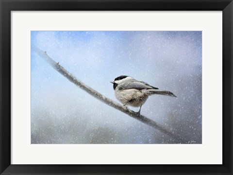 Framed Chickadee In The Snow Print
