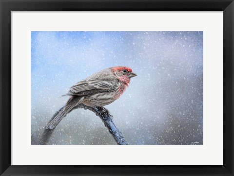 Framed Finch In The Snow Print