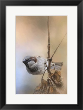 Framed Hanging On Sparrow Print