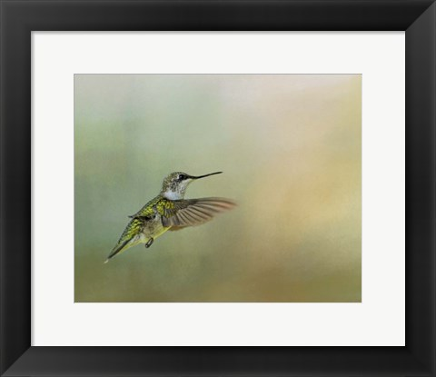 Framed Peaceful Day With A Hummingbird Print