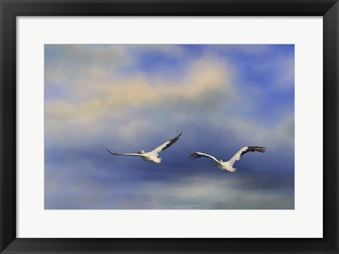 Framed Pelicans At Sea Print