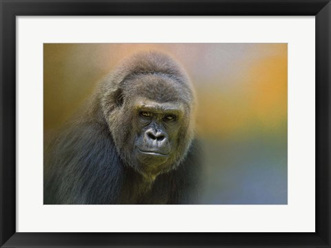 Framed Portrait Of A Gorilla Print