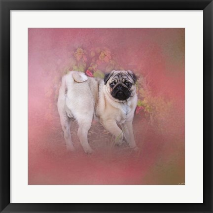 Framed Pug In The Garden Print