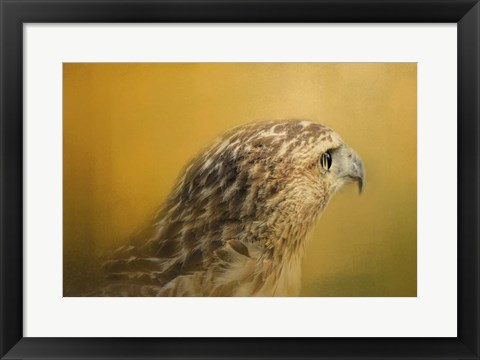 Framed Red Tailed Hawk At Sunset Print