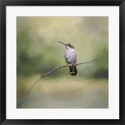 Framed Tiny Visitor Hummingbird Print