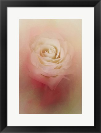 Framed Valentine Rose Print