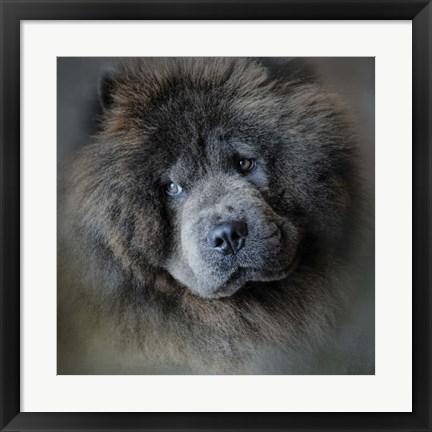 Framed Watching Master Blue Chow Chow Print