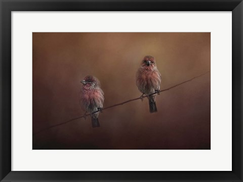 Framed Pair Of Finches Print