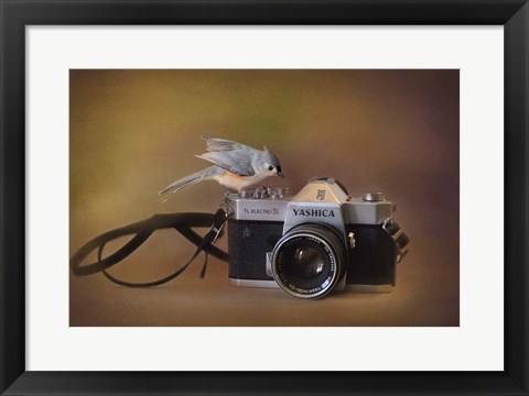 Framed Feathered Photographer Print