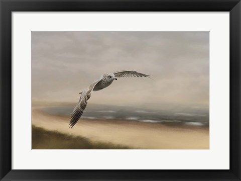 Framed Gull At The Shore Print