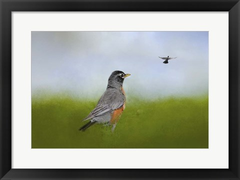 Framed Robin In The Field Print