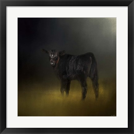 Framed Black Angus Calf In The Moonlight Print