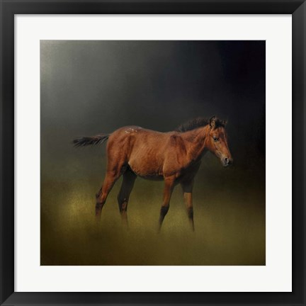 Framed Copper Colt In The Moon Light Print