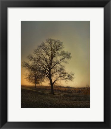 Framed Sunset At The Cotton Field Print
