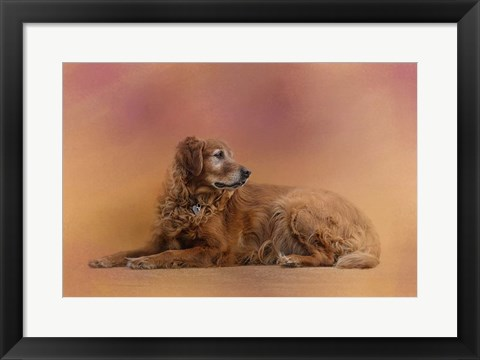 Framed Golden Retriever In The Setting Sun Print
