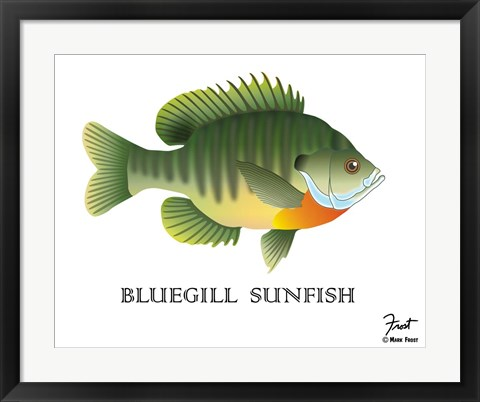 Framed Bluegill Sunfish Print