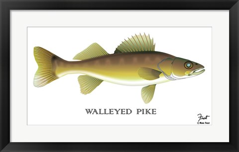 Framed Walleyed Pike Print