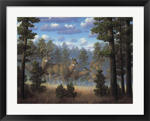 Framed White Tail Family Print