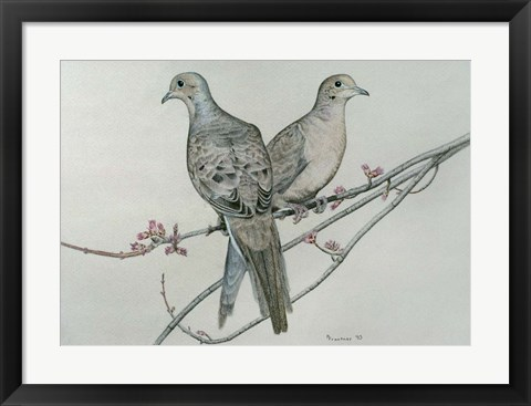 Framed Two Birds On Branch Print