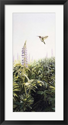 Framed Hummingbird 2 Print