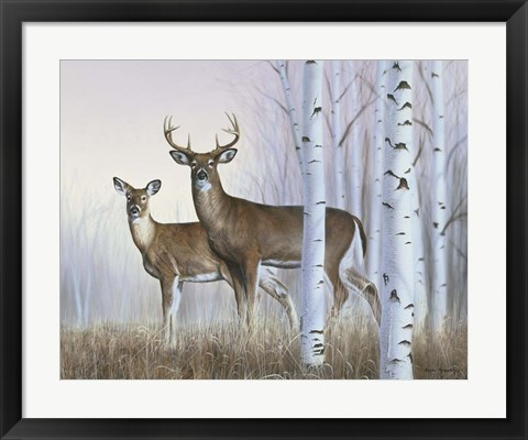 Framed Deer In Birch Woods Print