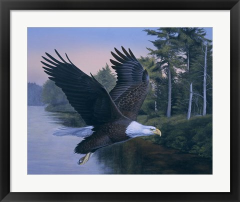 Framed Eagle Soaring Print