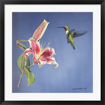 Framed Hummingbird And Lily Print