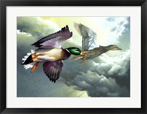 Framed Mallards In Flight Print