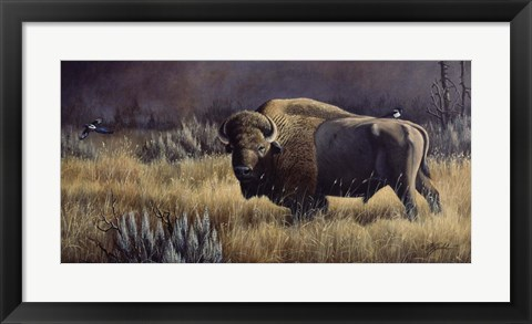Framed Bison And Magpies Print